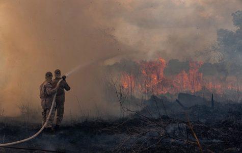 Amazon Wildfires: What Happens Now?