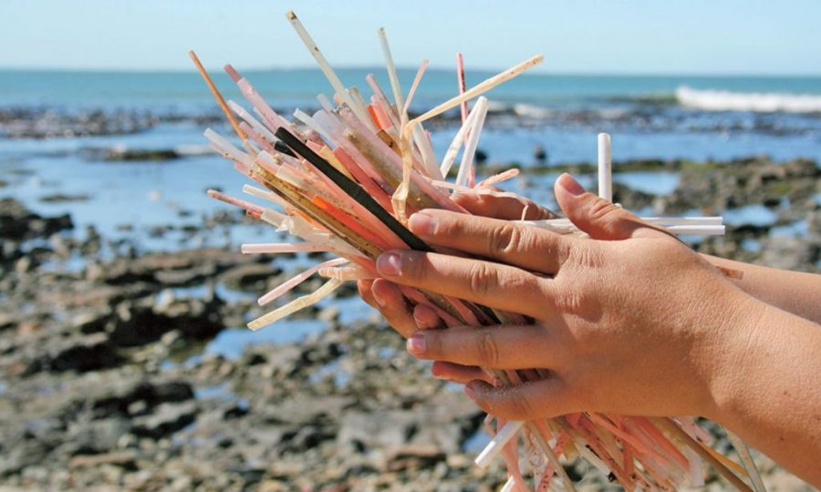Will Getting Rid of Plastic Straws Actually Impact the Environment? – Smoke  Signals