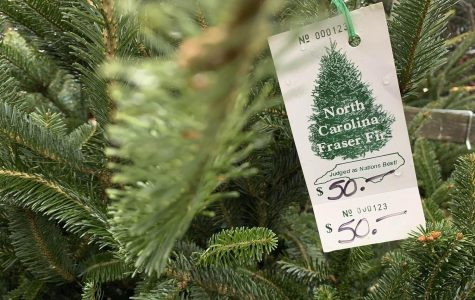 Christmas Trees' Costs on the Rise Because of Low Supply