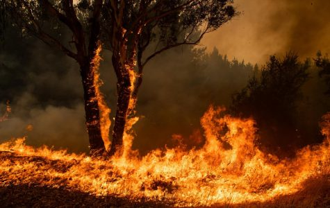 24 Arrested for Arson in Australia During Australia Fires