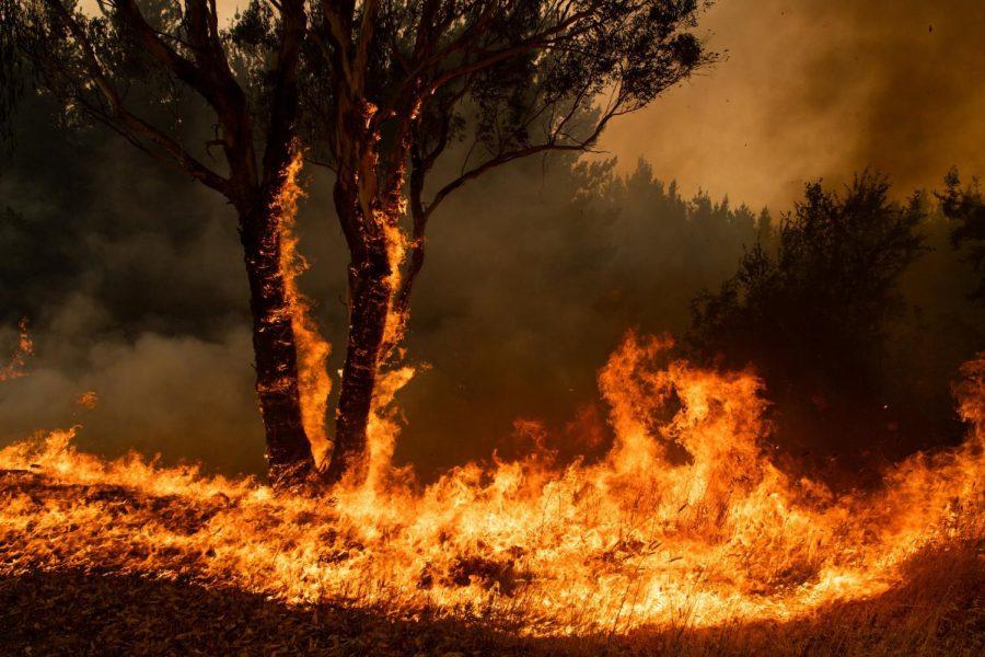 24 Arrested for Arson in Australia During Australia Fires