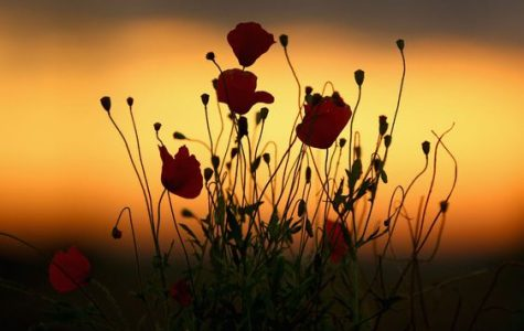 Flowers against the morning sun.