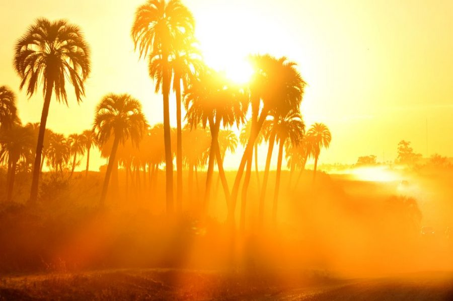 The weather in some parts of southern California was close to or above 90 degrees during this heat wave.