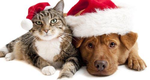 A dog and a cat wearing Santa hats.